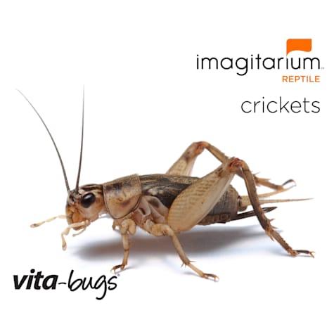 Vita-Bugs 1/8