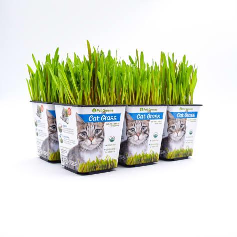 Pet Greens Cat Grass Variety Oat, Rye and Barley