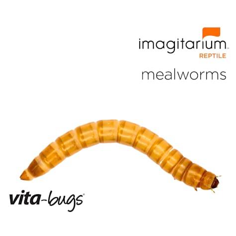 Vita-Bugs Medium Mealworms