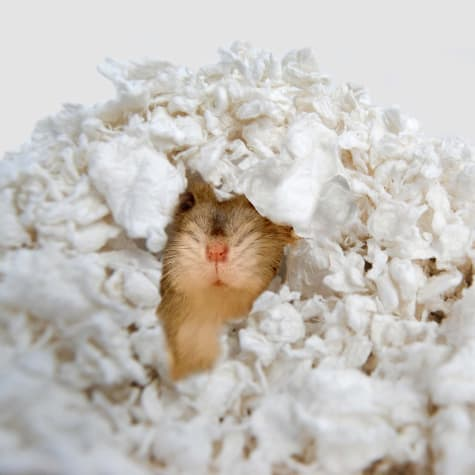 carefresh gerbil bedding