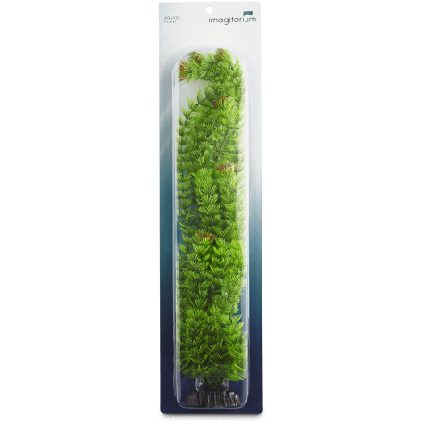 Imagitarium Ambulia Green Plant
