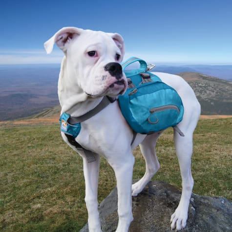 Kurgo Baxter Blue Dog Backpack