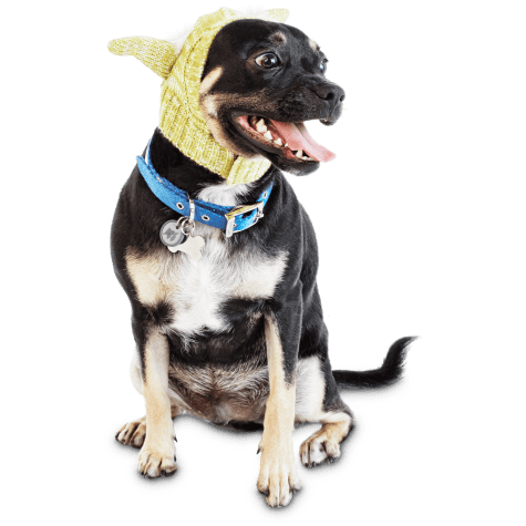 STAR WARS Knit Yoda Pet Hat