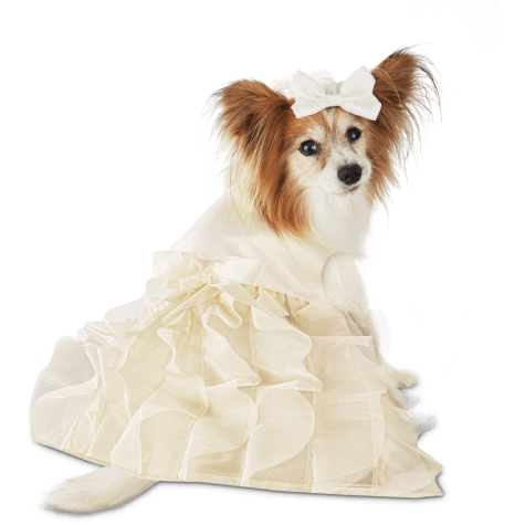 The You & Me Wedding Dress & Veil Set for Dogs