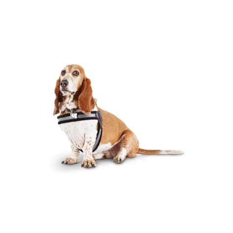 Good2Go Quick-Fit Dog Harness