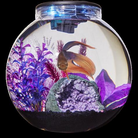 Imagitarium Freshwater Globe Kit, 3.1 GAL