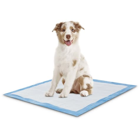 Animaze Absorbent Dog Potty Pads