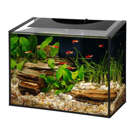 Aqueon Ascent Frameless LED Aquarium Kit