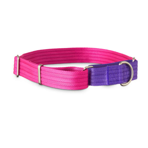 Good2Go Purple and Pink Two Tone Martingale Dog Collar