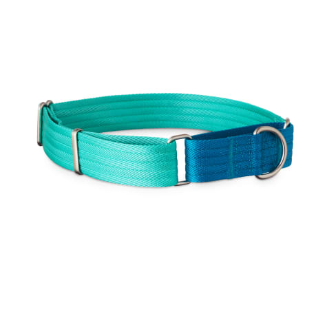Good2Go Teal and Blue Two Tone Martingale Dog Collar