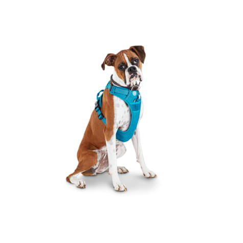 Good2Go Blue Front Walking Dog Harness
