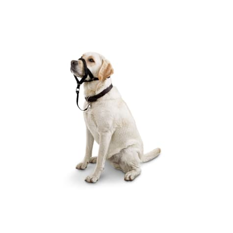 Good2Go Head Halter for Dogs