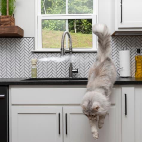 spray away cat deterrent