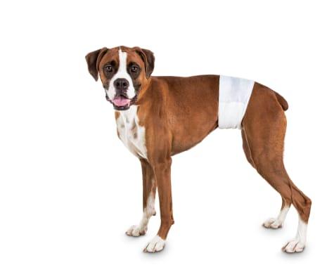 So Phresh Comfort Dry Disposable Male Dog Wraps