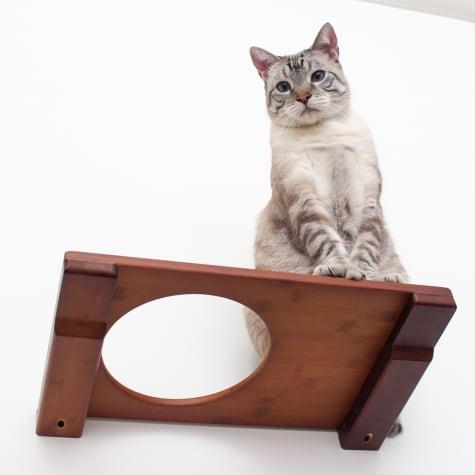 CatastrophiCreations The Cat Mod 18