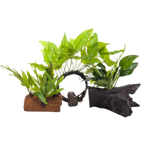 Plant Pack 1 - Decor for 10-20 Gallon Tanks