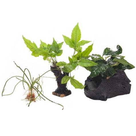 Plant Pack 2 - Decor for 10-20 Gallon Tanks