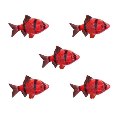 5-Pack Starfire Red Barb GloFish