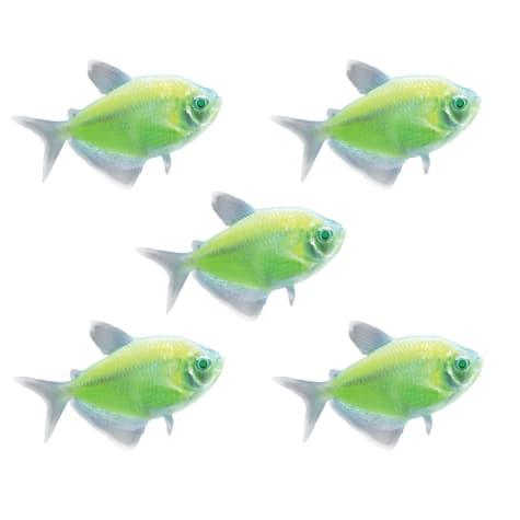 GloFish - 5-Pack Electric Green Tetra