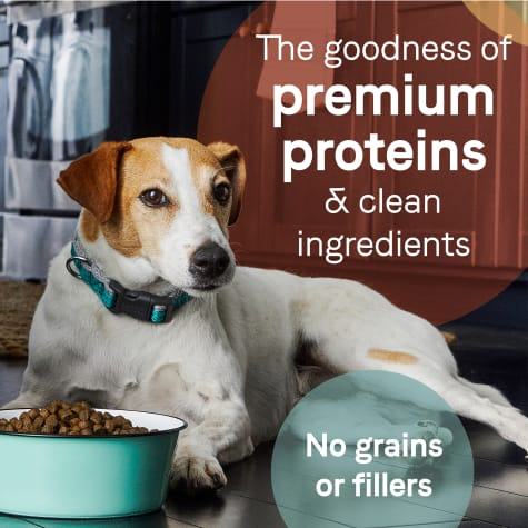 CANIDAE PURE Grain Free Limited Ingredient Real Bison, Lentil & Carrot Recipe Dry Dog Food