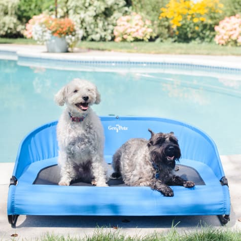 Gen7Pets Trailblazer Blue Cool-Air Cot for Dogs