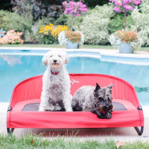 Gen7Pets Pathfinder Red Cool-Air Cot for Dogs