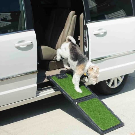 Gen7Pets Outdoor Natural Mini Ramp for Dogs