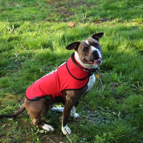 Healers Spot-Lite Dog Reflective Jacket with Red LED Lights