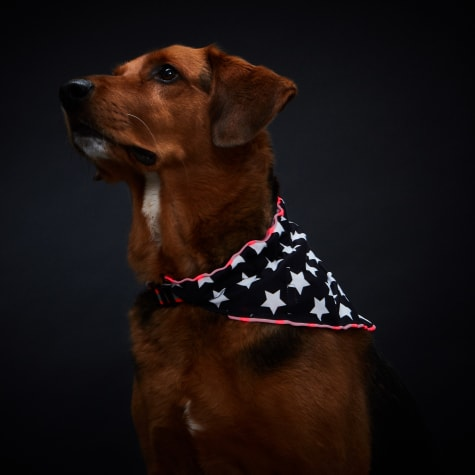 Healers Spot-Lite Dog Bandana Stars with LED Lights