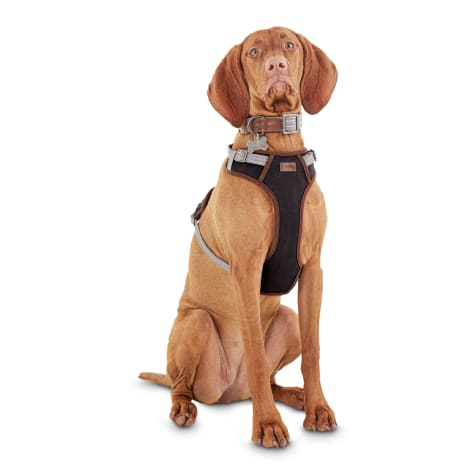 Reddy Gray Dog Harness