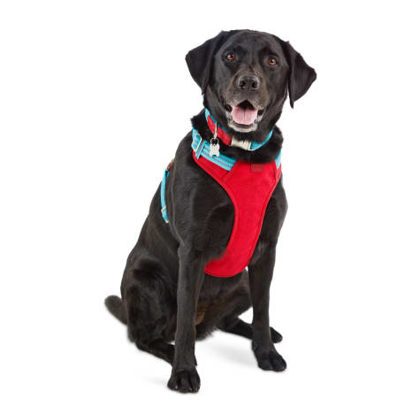 Reddy Cerulean Blue Dog Harness