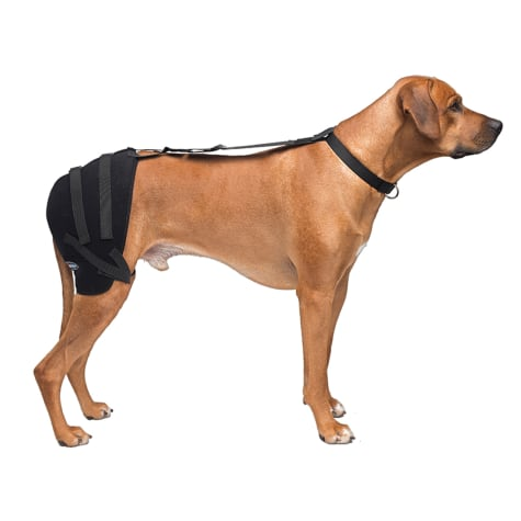 Caldera Hot & Cold Therapy Wrap with Gel for Dogs Hip