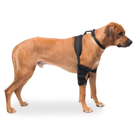 Caldera Hot & Cold Therapy Wrap with Gel for Dog Elbows