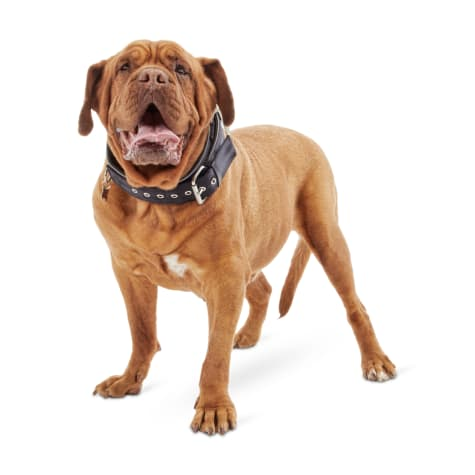 Good2Go Black Collar for Big Dogs