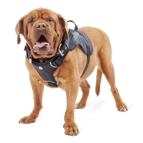 Good2Go Black Harness for Big Dogs