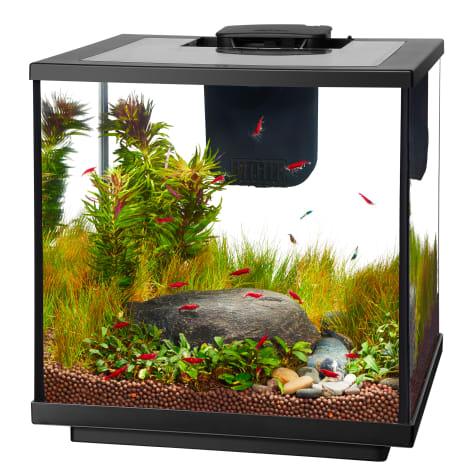 Aqueon LED 7.5 Gallon Shrimp Aquarium Kit