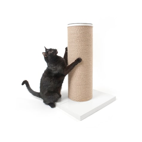 Hauspanther Collection by Primetime MaxScratch in White Cat Toys