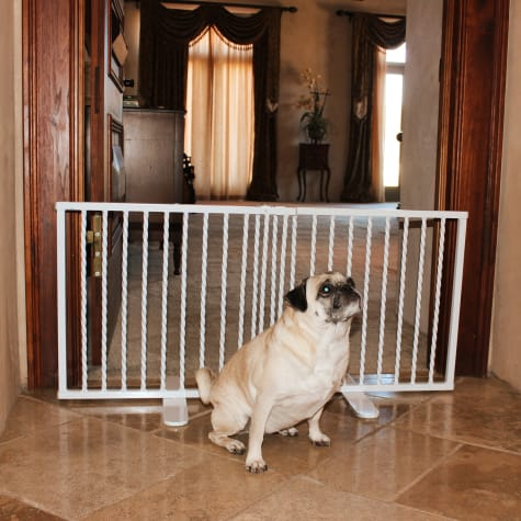 Cardinal Gates Wrought Iron Step Over White Gate for Dogs