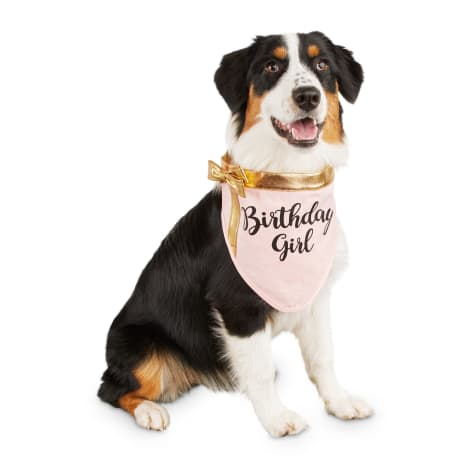 Bond & Co. Birthday Girl Dog Bandana