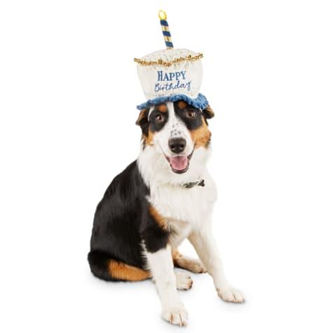 Bond & Co. Light Up Birthday Dog Hat