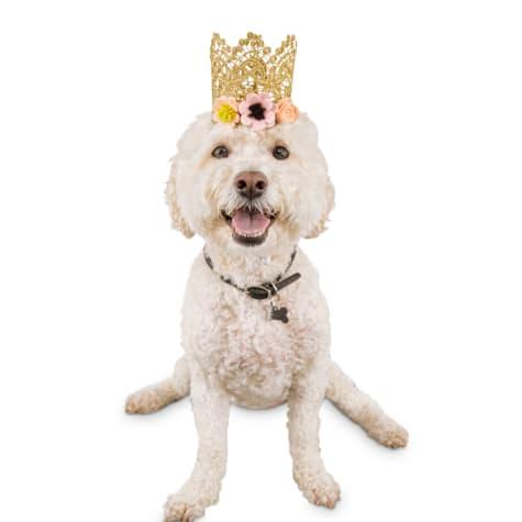 Bond & Co. Birthday Girl Dog Crown