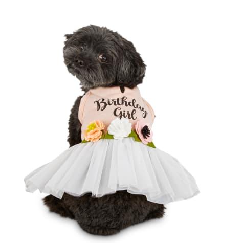 Bond & Co. Birthday Girl Dog Dress