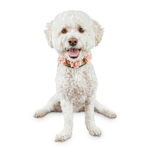 Bond & Co. Flower Girl Dog Necklace