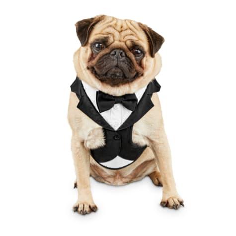 Bond & Co. Tuxedo Dog Harness