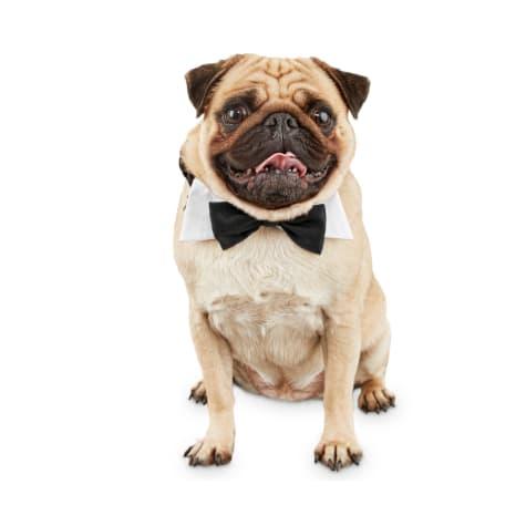 Bond & Co. Tuxedo Dog Bow Tie