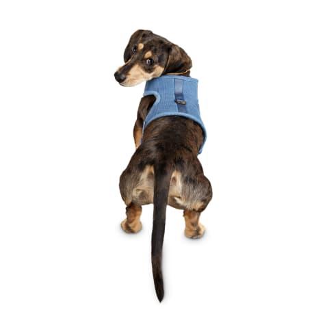 Bond & Co. Little Pup Blue Dog Harness