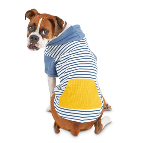 Bond & Co. Golden Pocket Dog Hoodie