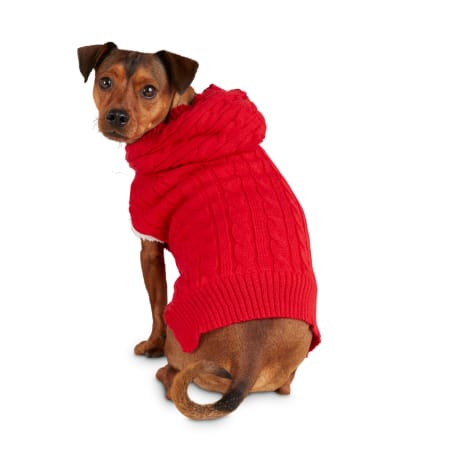 Bond & Co. Comfy Camper Red Dog Hoodie