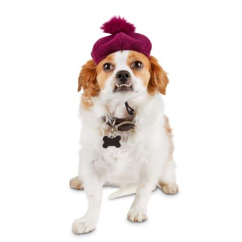 Bond & Co. Knit Dog Beret