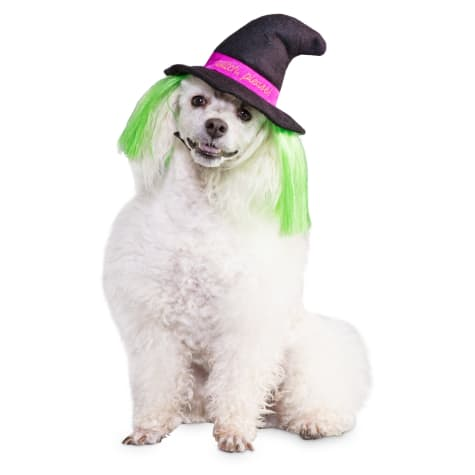 Bootique Witch Please Dog Hat